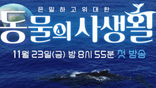 Secrets of Wildlife Episode 9 Eng Sub